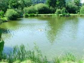 Conwy Water Gardens Coarse Fishery
