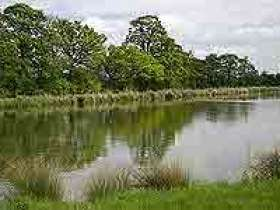 Mallory Park Fisheries